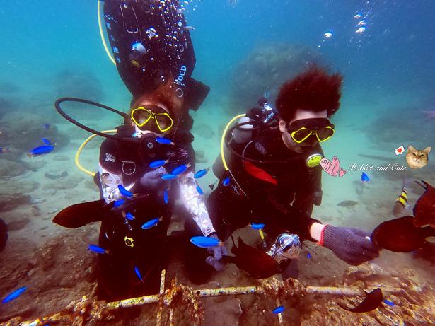 澎湖海洋途徑潛水體驗餵魚.jpg