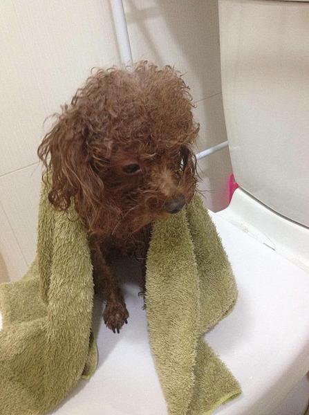 狗狗洗澡20分鐘搞定10