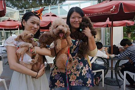 小玫手作寵物幸福手工皂辦的2014.10.25萬聖節狗聚