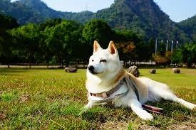 狗狗為什麼要曬太陽?有哪些好處?