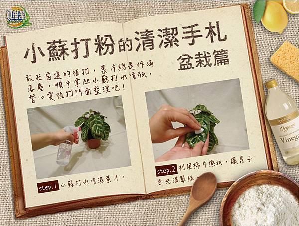 小蘇打粉II-盆栽篇