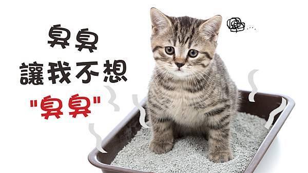 貓砂.jpg