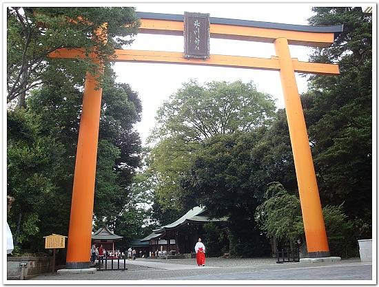249-冰川神社著名的大鳥居,高約15公尺,是現今日本第一大的木造鳥居。.jpg