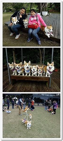 20131222-桃園綠風草原餐廳狗聚.jpg