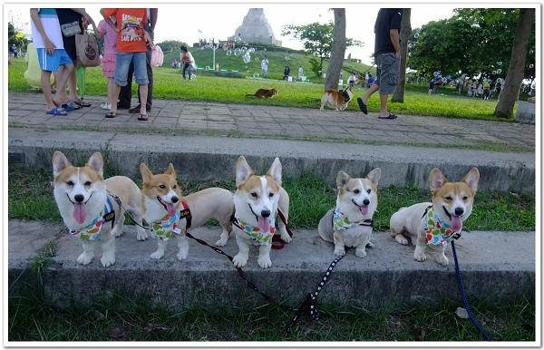 20140525-番外篇台南狗聚合照.jpg