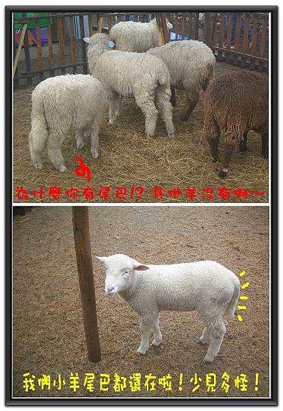 羊尾巴探索.jpg