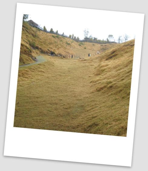 延伸的青青草原..這兒的羊兒比起動物園的幸福很多ㄋ.jpg