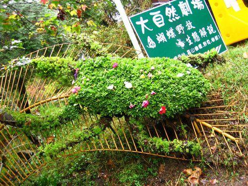 大自然劇場-鍬形蟲.JPG