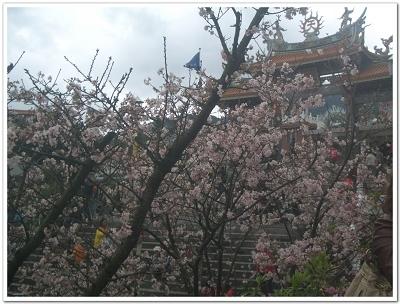 櫻花vs天元宮.jpg