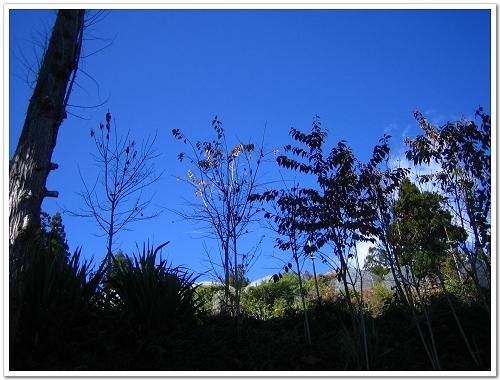 頗有意境的藍天.jpg