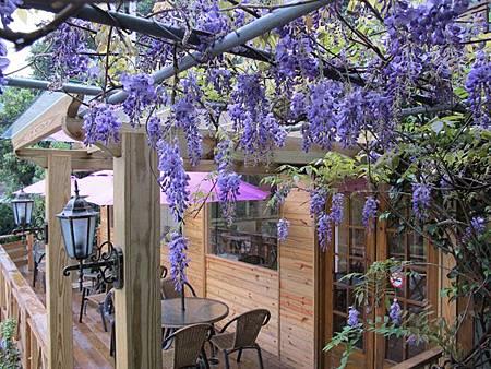 紫藤花.jpg