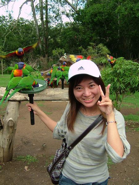 彩虹鸚鵡餵食秀