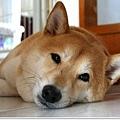 http://f8.wretch.yimg.com/melody5168tw/4/1919018856.jpg