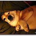 http://f8.wretch.yimg.com/melody5168tw/4/1919018849.jpg