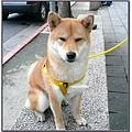 http://f8.wretch.yimg.com/melody5168tw/7/1666839467.jpg