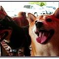http://f8.wretch.yimg.com/melody5168tw/9/1100845778.jpg