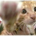 http://f8.wretch.yimg.com/melody5168tw/16/1365129736.jpg