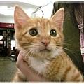 http://f8.wretch.yimg.com/melody5168tw/16/1365129735.jpg