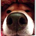 http://f8.wretch.yimg.com/melody5168tw/4/1919018836.jpg