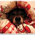 http://f8.wretch.yimg.com/melody5168tw/4/1919018837.jpg