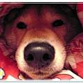 http://f8.wretch.yimg.com/melody5168tw/4/1919018838.jpg