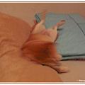 http://f8.wretch.yimg.com/melody5168tw/4/1919025964.jpg