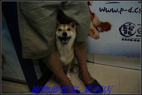 http://f8.wretch.yimg.com/melody5168tw/20/1223280230.jpg