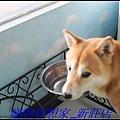 http://f8.wretch.yimg.com/melody5168tw/20/1223280237.jpg