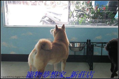 http://f8.wretch.yimg.com/melody5168tw/20/1223280235.jpg