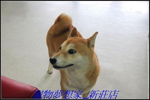 http://f8.wretch.yimg.com/melody5168tw/20/1223280233.jpg