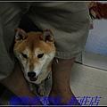 http://f8.wretch.yimg.com/melody5168tw/20/1223280232.jpg