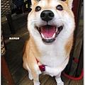 http://f8.wretch.yimg.com/melody5168tw/4/1919018835.jpg