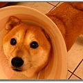 http://f8.wretch.yimg.com/melody5168tw/7/1666830020.jpg