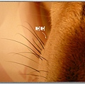 http://f8.wretch.yimg.com/melody5168tw/7/1666830023.jpg