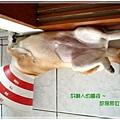 http://f8.wretch.yimg.com/melody5168tw/24/1072868951.jpg