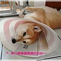 http://f8.wretch.yimg.com/melody5168tw/24/1072868955.jpg
