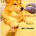 http://f8.wretch.yimg.com/melody5168tw/24/1072868981.jpg
