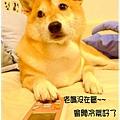 http://f8.wretch.yimg.com/melody5168tw/24/1072868979.jpg