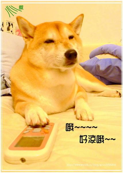 http://f8.wretch.yimg.com/melody5168tw/24/1072868978.jpg