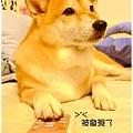 http://f8.wretch.yimg.com/melody5168tw/24/1072868980.jpg