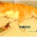 http://f8.wretch.yimg.com/melody5168tw/24/1072868982.jpg