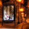 http://f8.wretch.yimg.com/melody5168tw/24/1072868974.jpg