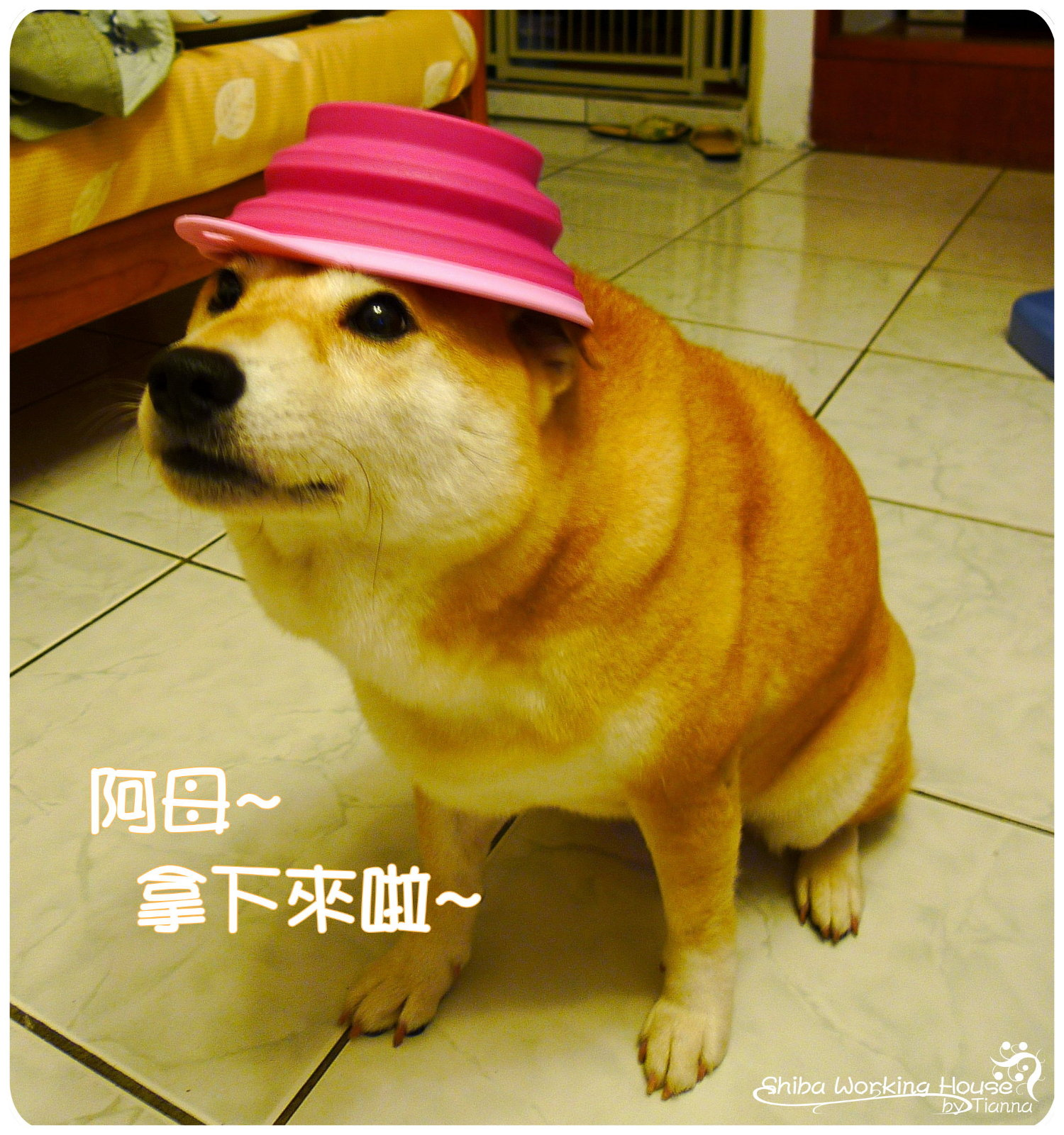 折疊碗 (10).JPG