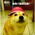 折疊碗 (9).JPG