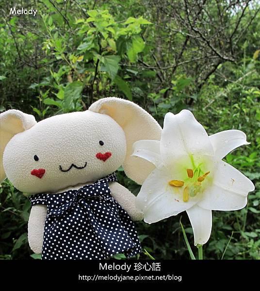 1219三義野百合秘密花園 .jpg