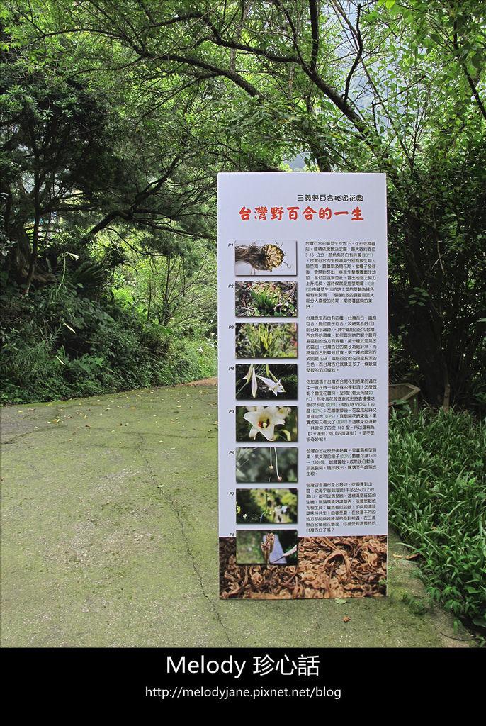 122三義野百合秘密花園 .jpg