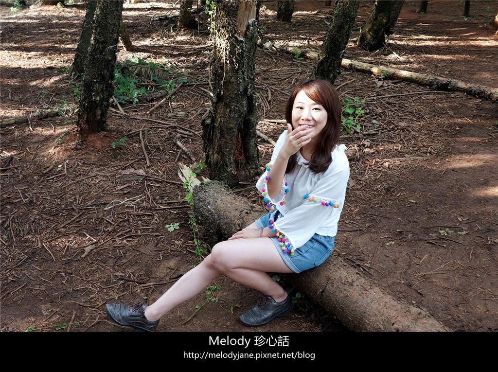 410 2九天森林.jpg