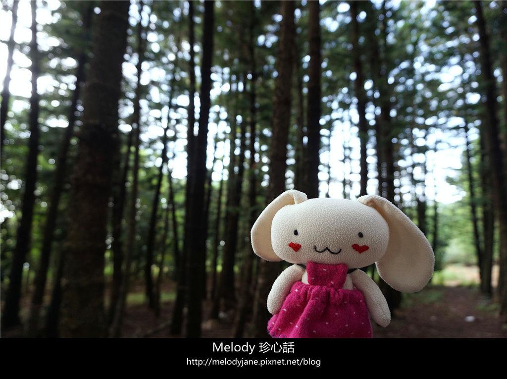 44九天森林.jpg