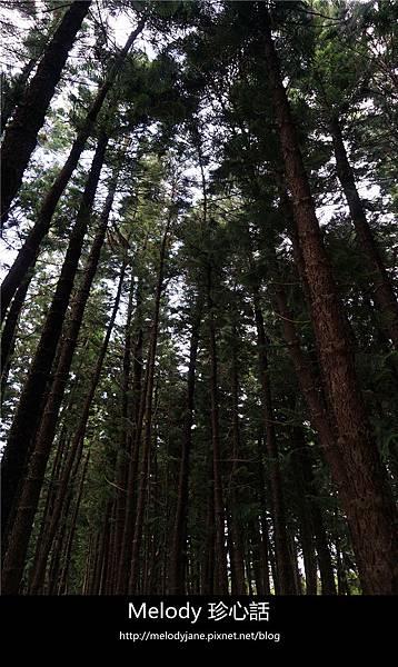45 2九天森林.jpg