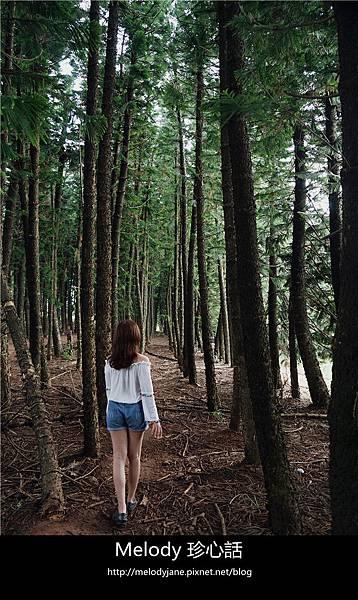 46九天森林.jpg